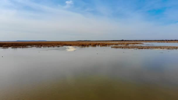 First days of Spring with the retun of migratory birds in Neajlov Delta or Balta Comana. The largest wet area and biodiversity in southern Romania after the Danube Delta Biosphere Reserve.