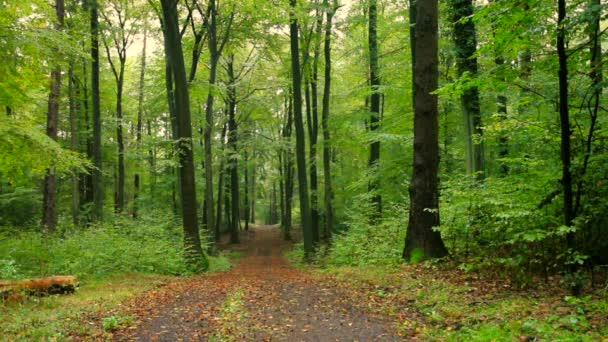 Herbst-Regenwald-Landschaft im Siebengebirge