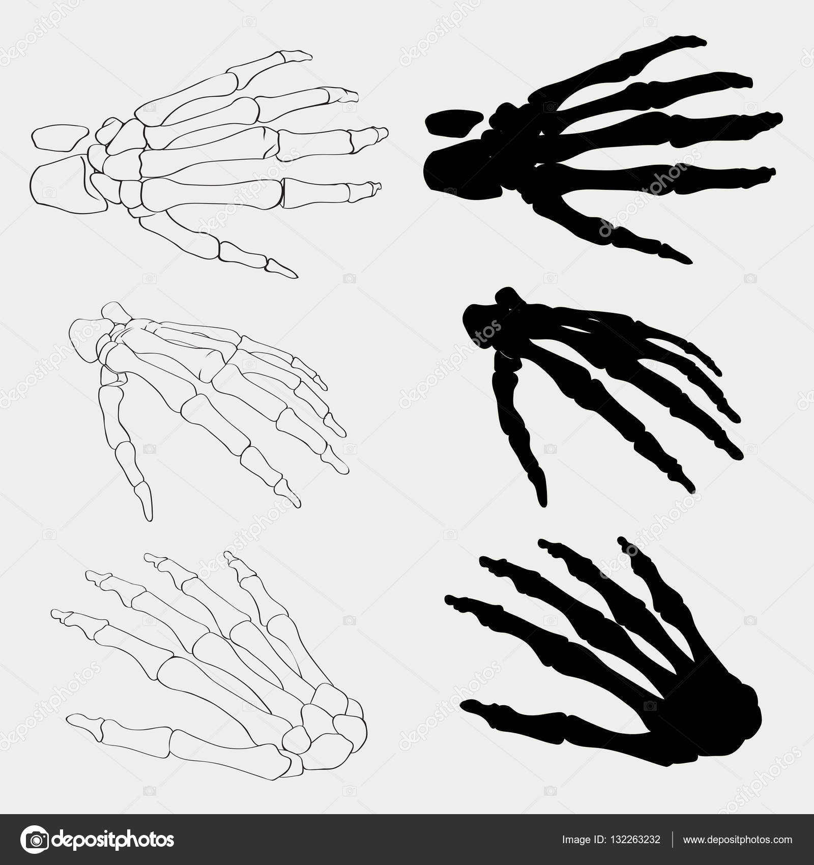 Human Hand Bones Anatomy Isolated Vector Illustration Black And