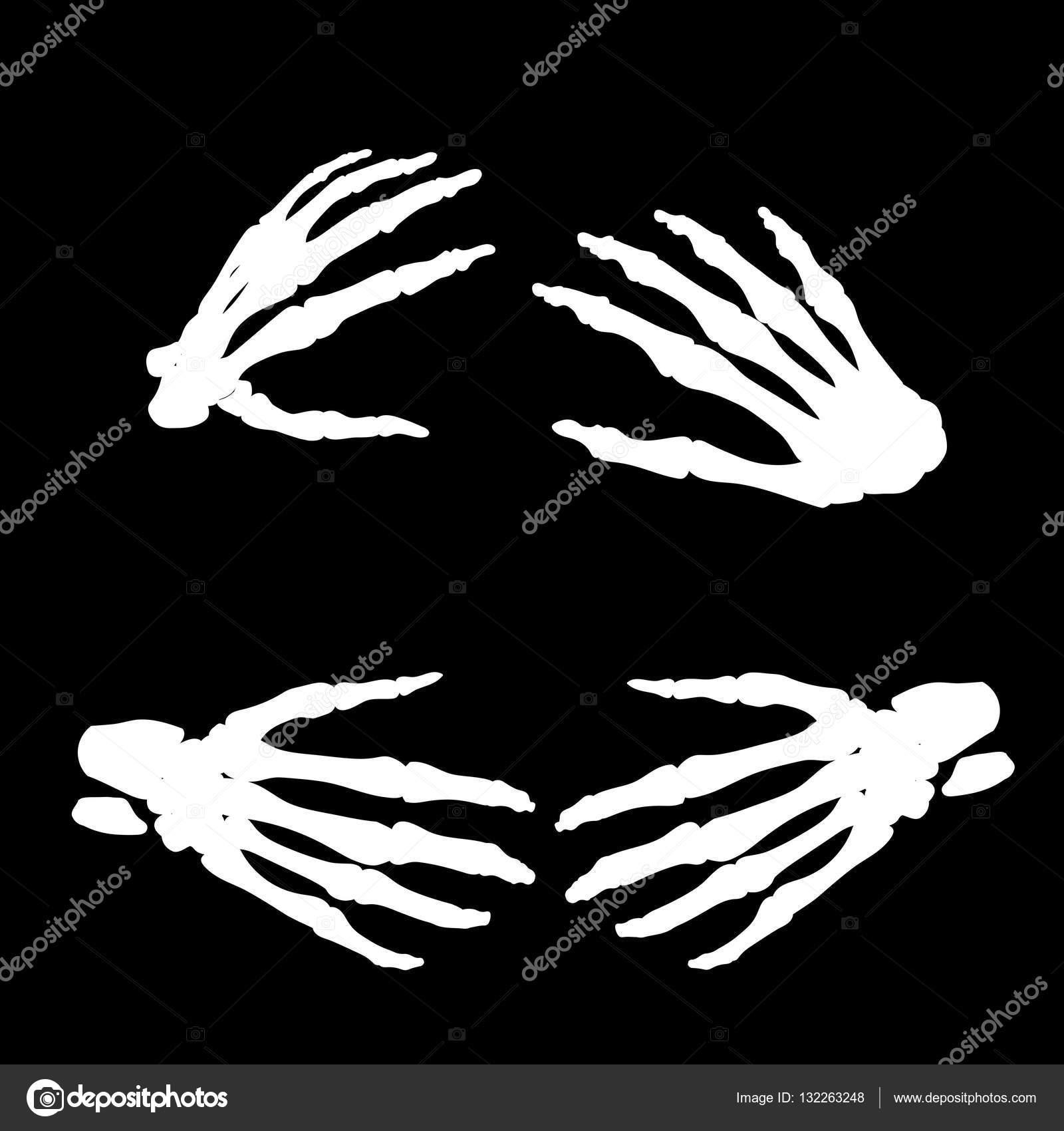 Anatomie der menschlichen Hand Knochen isoliert Vektor-Illustration ...