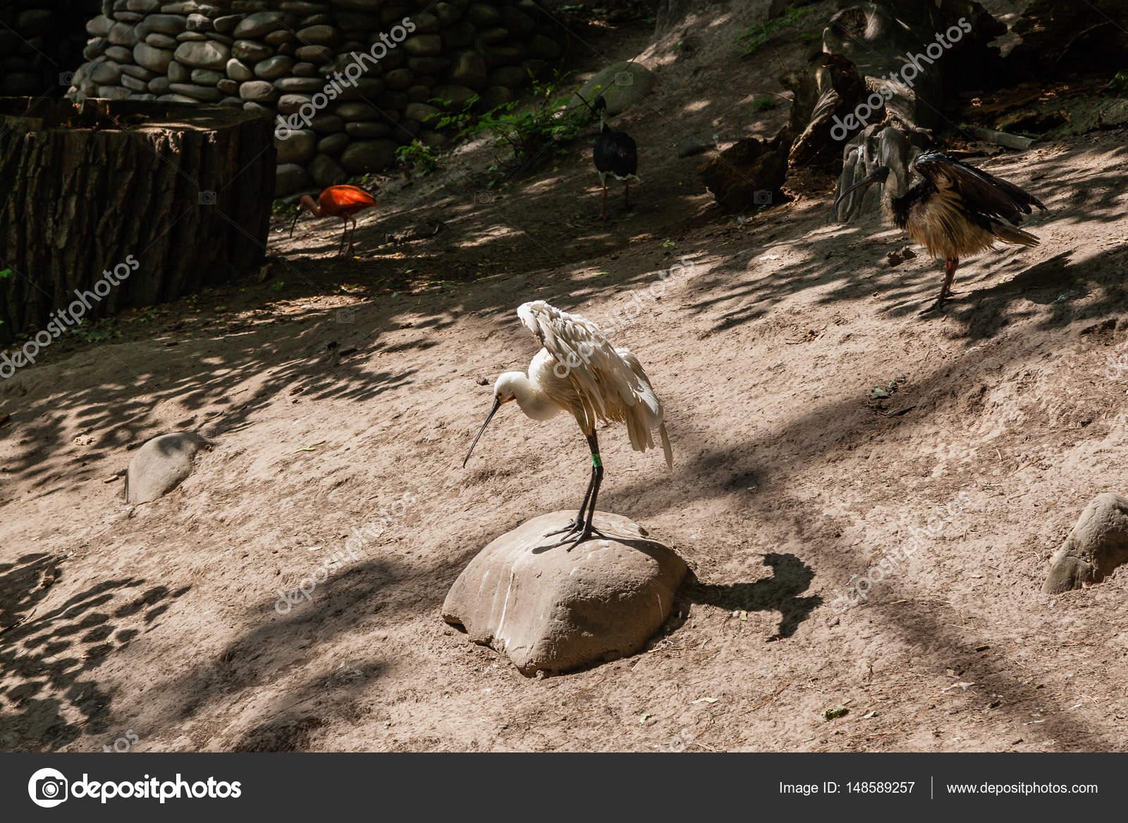 Ένα μεγάλο λευκό πουλί