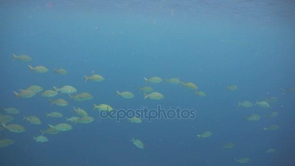 Shoal pesci tropicali. Filippine