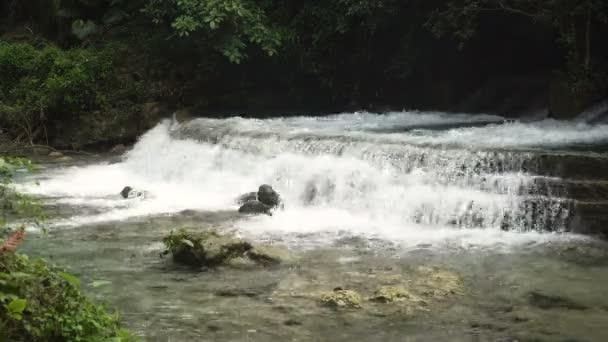 Řeka v pralese