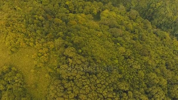 Letecký pohled na večerní deštný prales. Camiguin island Filipíny.