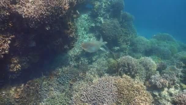 Tartaruga di mare sotto lacqua.
