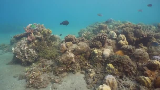 Barriera corallina e pesci tropicali. Bali, Indonesia.