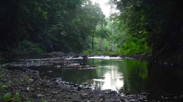 Řeka v deštném pralese. Bali, Indonésie.