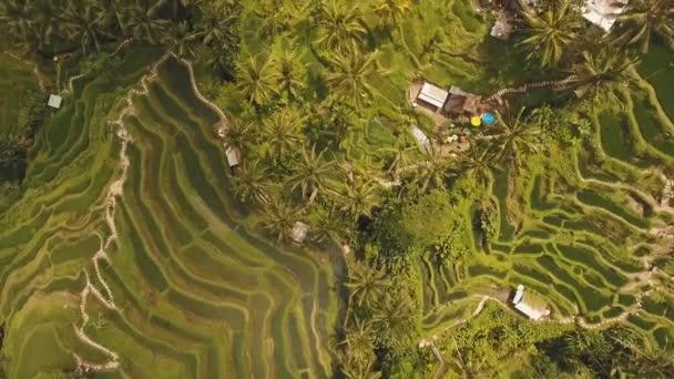 Risaie A Terrazza A Ubud Bali Indonesia