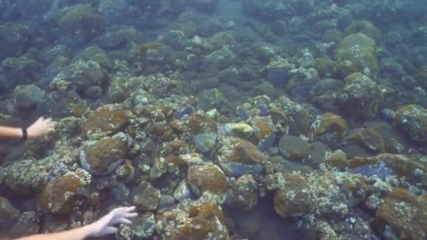 Mädchen schnorchelt unter Wasser.