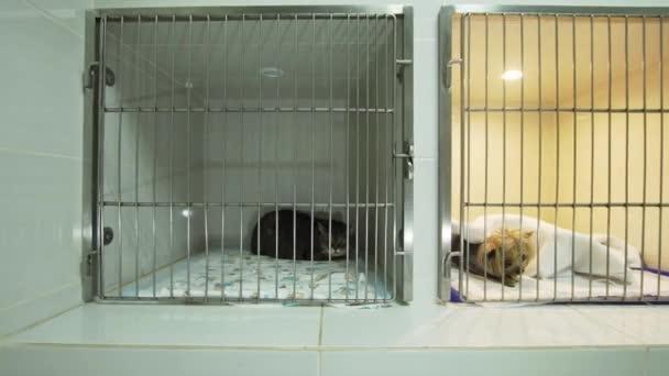 Pes a kočka v kleci po operaci