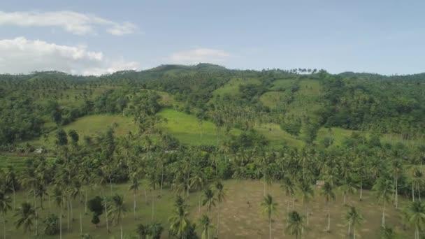 Palmy a zemědělské půdy v horských provincii