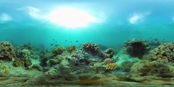 Egy korallzátony víz alatti világa 360VR.