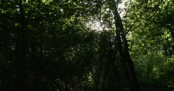 Dolů a pak vystřelí divoké tlusté lesa s sluneční paprsky, lámání přes jeho Greenary a četné větve a Twings ve východní Evropě v létě