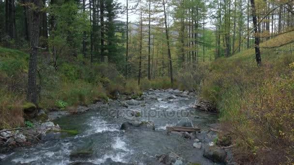 Poco profondo fiume vorticoso attraverso le rocce che attraversa siberiano bosco bellissimo paesaggio naturale