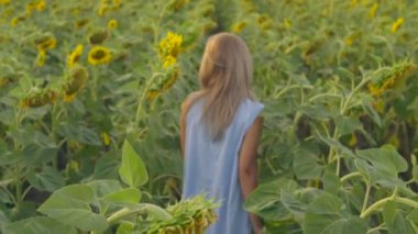 Image result for walking in field of sunflowers