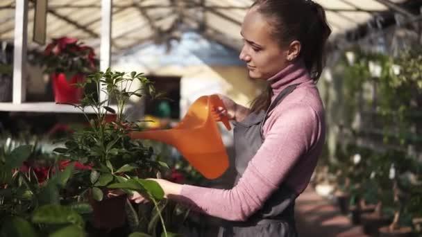 Atraktivní žena zahradník v uniformě zalévání Květináč s zelených rostlin s zalévání zahrady mohou ve skleníku