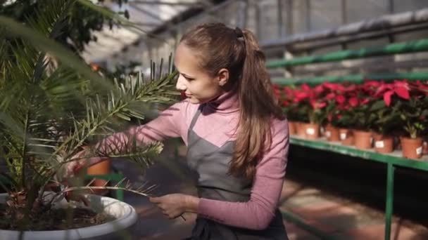 Young woman cutting a dry branch using garden pruner in greenhouse. Closeup view