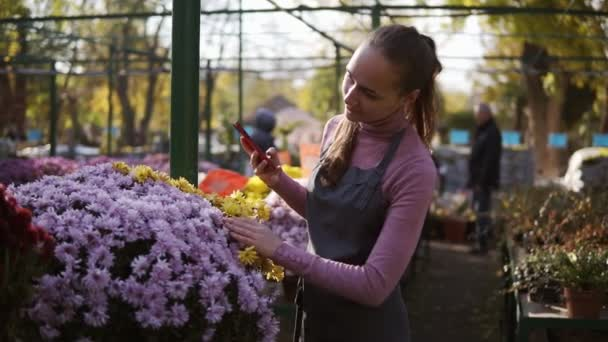 Young female gardener taking picture of chrysanthemum with smartphone in greenhouse