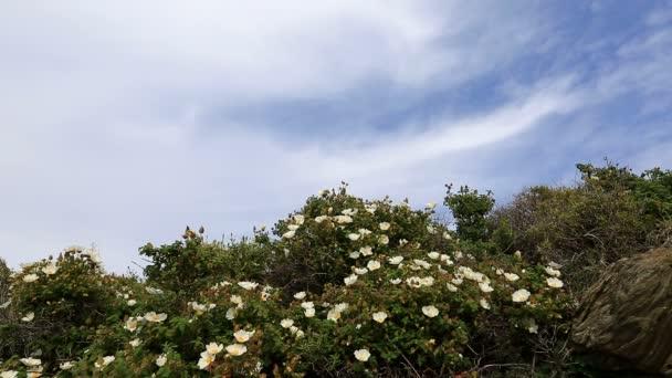 divoké květy s cloudscape timelapse