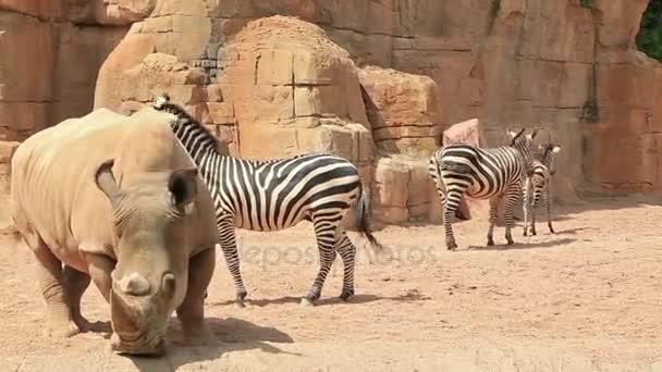 Velké bílé nosorožce a zebry na povahu