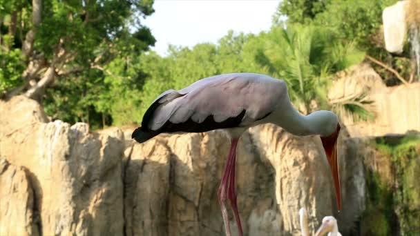 fehér gólya madár