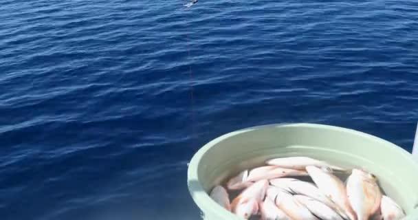 Frissen fogott hal horgászboton Halott halak egy vödörben