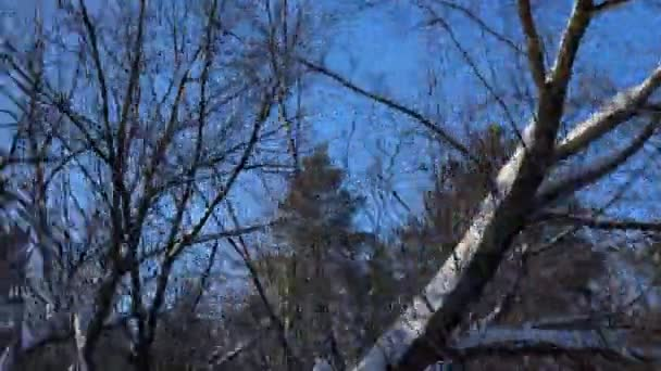 Videography winter forest from the window of a moving car or train  amera  moves past the trees, shrubs, pine trees covered with snow, snow drifts   Sometimes the sun breaks through the trees
