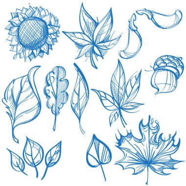 Big outline set of leaves. Labels for design autumn party and various items. clip art vector
