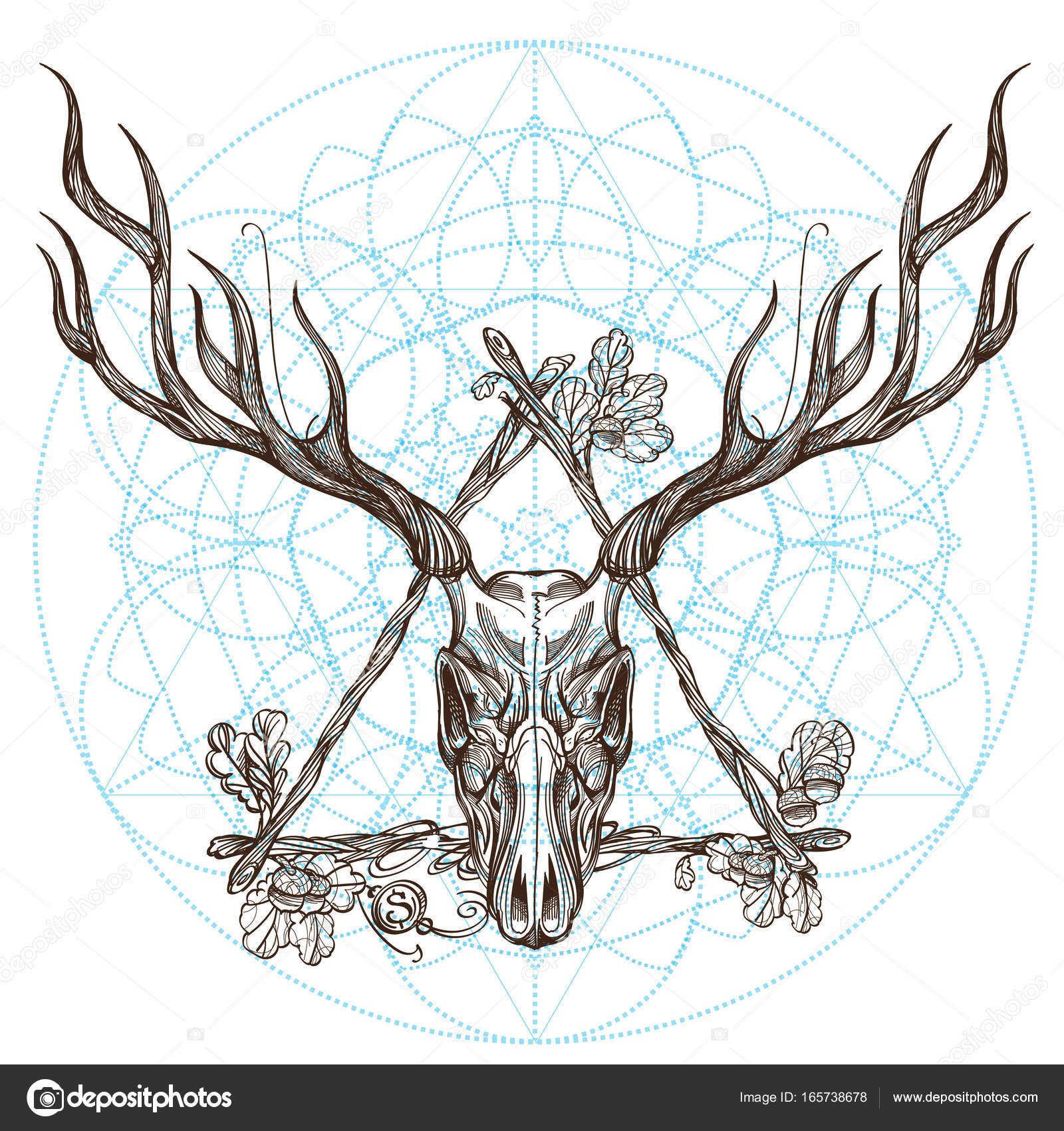 Dibujo del cráneo de los ciervos en marco — Vector de stock ...