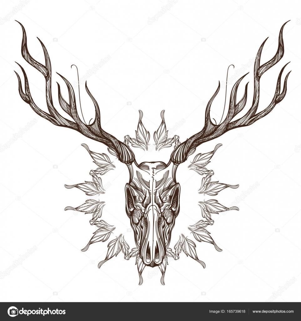 dibujo del cráneo de los ciervos — Vector de stock © filkusto #165739618