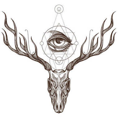 Sketch of deer skull