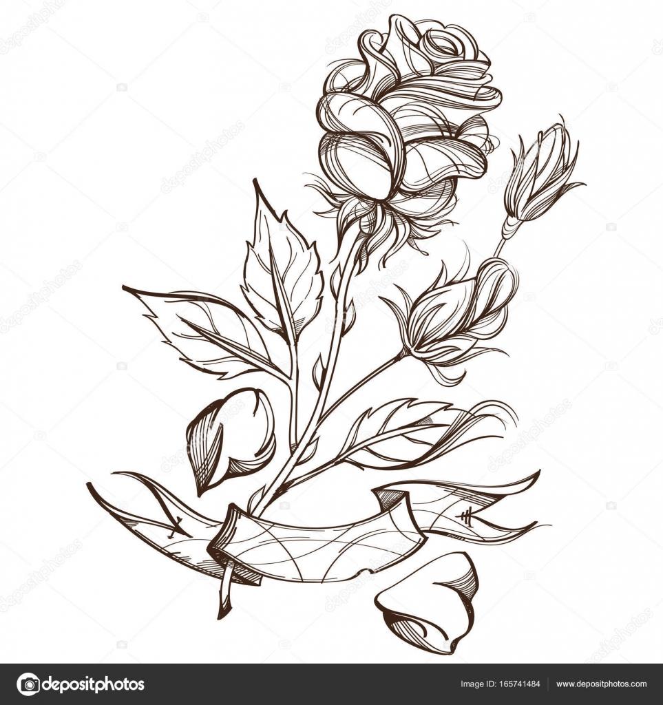 Elle çizilmiş Gül Tasarım öğesi Stok Vektör Filkusto 165741484