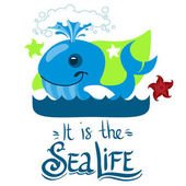 Fényképek Kék bálna és elszigetelt fehér háttér, szöveg hely tengeri csillag