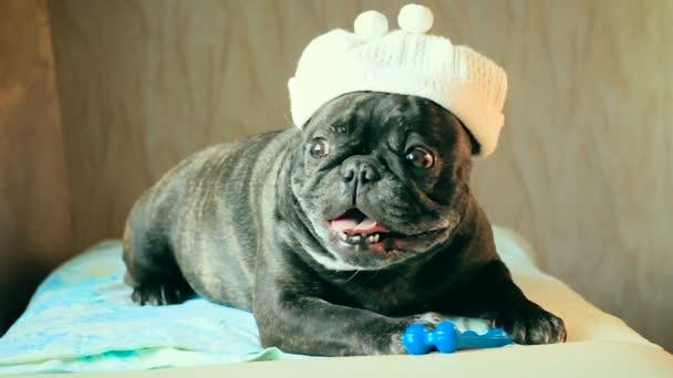 Egy francia bulldog kutya-val egy kalap a fején tartja a csont a paws