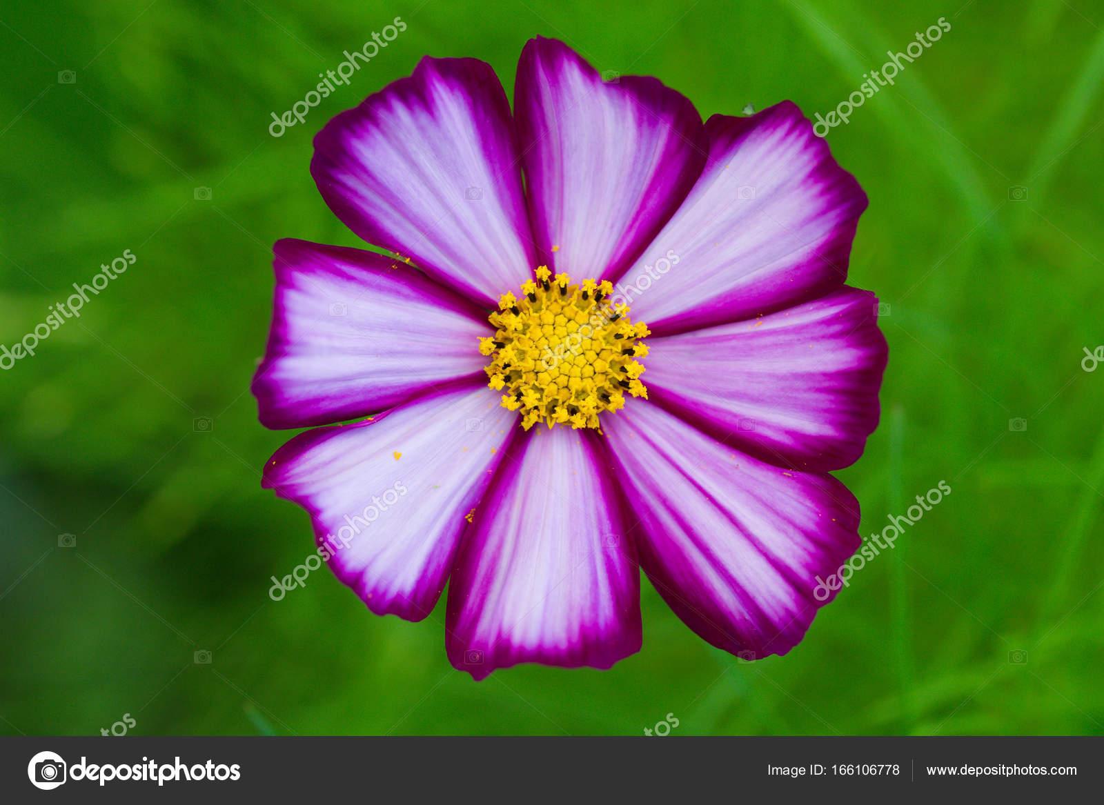 Fabulous Mooie bloemen, zomer Tuin, mooie achtergrond, bloeien — Stockfoto  #UC51