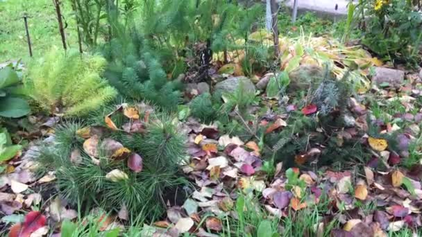 Signs of autumn in the flower bed