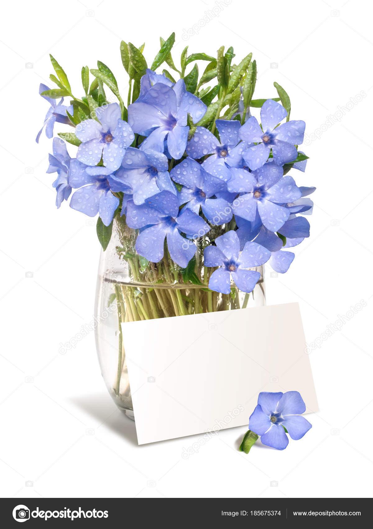 Hell violett wild Immergrün Blumenstrauß mit einer Blanc für Yo ...