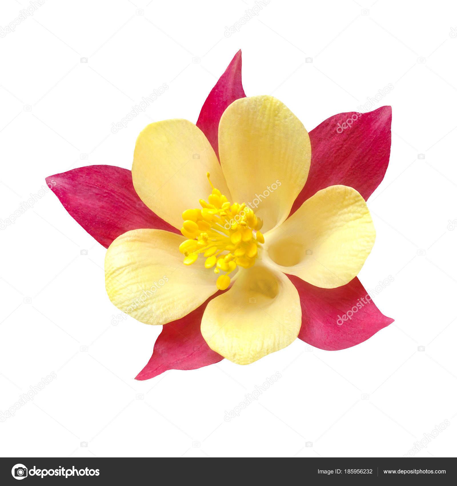 Желтый цветок похож на дельфиниум