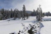 Torrente ghiacciato con abeti innevati in una giornata invernale in Svizzera