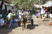 Bahir Dar, Ethiopia, February 14 2015: An old couple drives their donkey carriage through a market