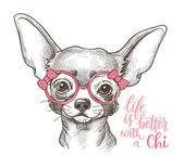 Dívka Chihuahua ilustrační tisk