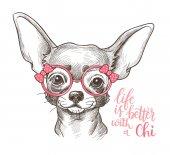 Lány Chihuahua ábra nyomtatási