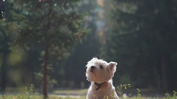 Puppy jumps and lifts the paw in autumn park