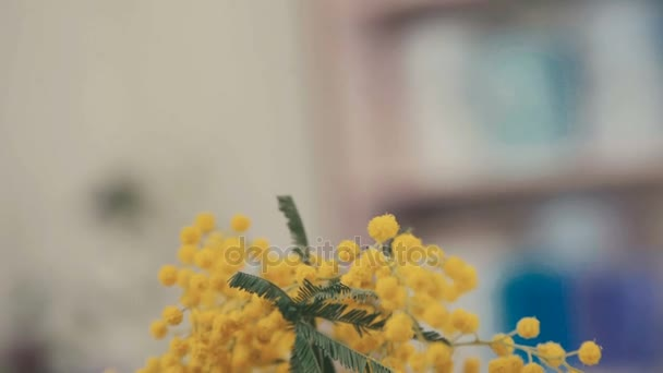 Close-up: branches of yellow mimosa. Spring flowers. Florist.