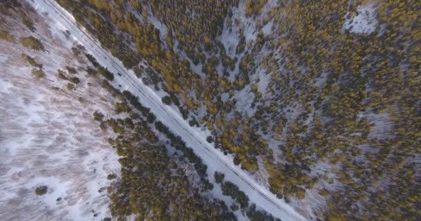 Jehličnaté stromy - sibiřský smrk - obklopen bílý sníh