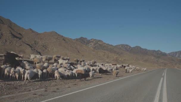 Stádo koz je chůze po silnici v hornaté oblasti.