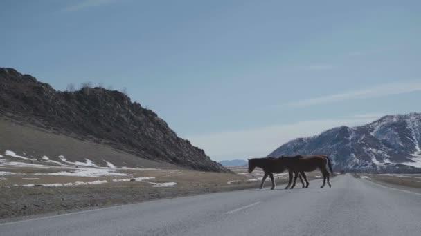 Dva koně přes silnici v hornaté oblasti