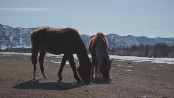 Wilde Pferde auf dem Berg. Zwei Pferde in den Bergen