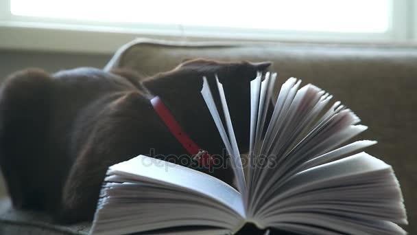 dicke braune Katze auf der Couch mit einem Buch. eine gelbäugige schwarze Katze