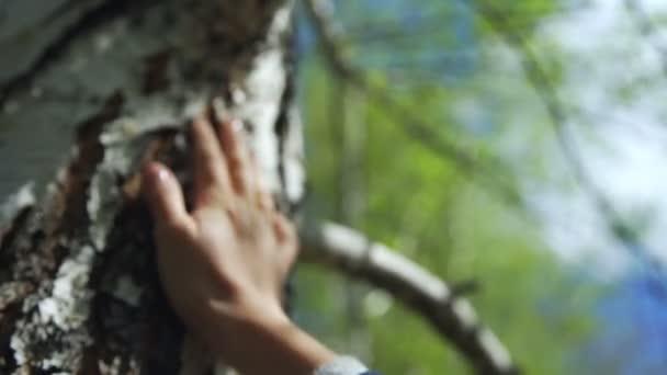 Ženská ruka dotkne břízy - černé a bílé strom